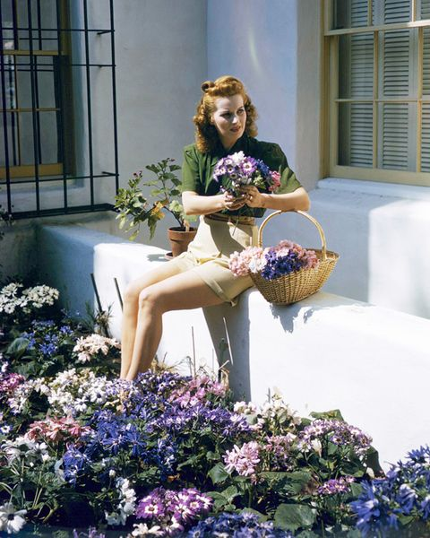 Human, Plant, Human body, Window, Shrub, Flower, Garden, Mammal, Flowerpot, Purple,