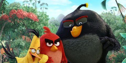 Beak, Organism, Vertebrate, Bird, Animation, Fictional character, Wing, Terrestrial animal, Flightless bird, Cartoon,