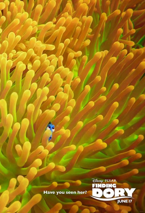 Yellow, Colorfulness, Coral, Sea anemone, Reef,