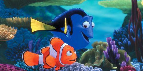 anemone fish, Organism, Natural environment, Vertebrate, clownfish, Fish, Underwater, Coral, Sea anemone, Coral reef,