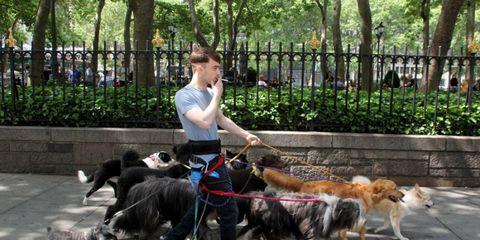 Human, Dog breed, Dog, Carnivore, Mammal, Sporting Group, Leash, Fur, Companion dog, Canidae,