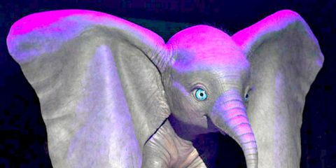 Elephant, Purple, Elephants and Mammoths, Pink, Organism, Performance, Fictional character, Magenta,