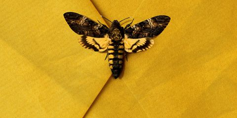 Poster, Font, Advertising, Pest, Moth, Insect,