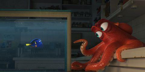 Organism, Carmine, Orange, Octopus, octopus, Cephalopod, Marine invertebrates, Invertebrate, Display device, Coquelicot,