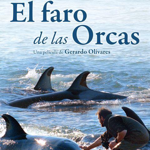 Vertebrate, Organism, Marine mammal, Fin, Ocean, Adaptation, Cetacea, Marine biology, Dolphin, Guitar,