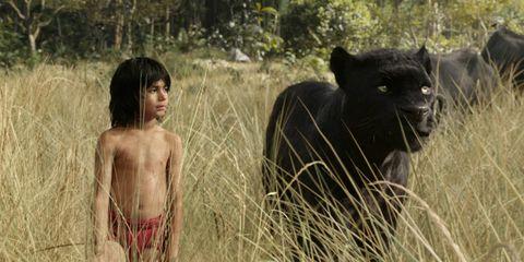 Adaptation, Organ, People in nature, Terrestrial animal, Grass family, Snout, Fur, Wildlife, Savanna, Love,