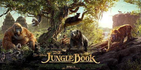 Nature, Organism, Branch, Carnivore, Terrestrial animal, Adaptation, Grizzly bear, Nature reserve, Biome, Kodiak bear,