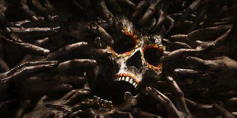 Organism, Skull, Bone, Black, Octopus, Science,
