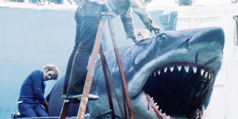 Tooth, Lamniformes, Jaw, Cartilaginous fish, Extinction, Lamnidae, Carcharhiniformes, Shark, Requiem shark, Fang,