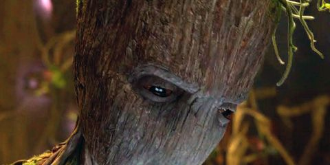 Tree, Eye, Leaf, Plant, Branch, Fictional character, Trunk, Wildlife, Sloth,