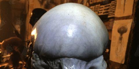 Bone, Sculpture, Skull, Statue, Anthropology,