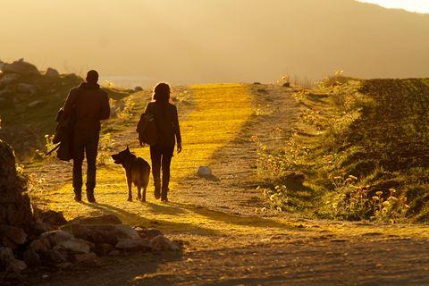 Human, Dog, Carnivore, Mammal, People in nature, Sunlight, Dog breed, Adventure, Sporting Group, Walking,