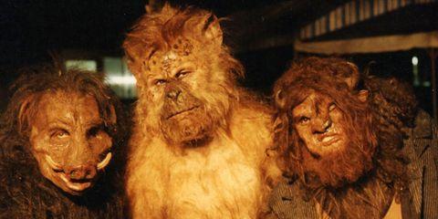 Terrestrial animal, Fur, Natural material, Fictional character, Wrinkle, Primate, Chewbacca,