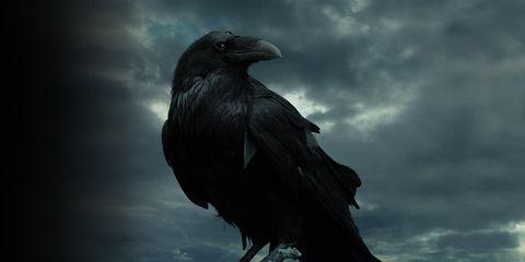 Atmosphere, Crow, Bird, Darkness, Raven, Crow-like bird, raven, Beauty, American crow, Feather,