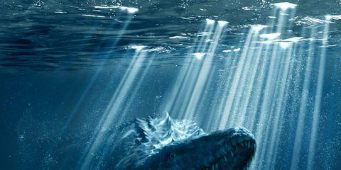 Fluid, Liquid, Organism, Vertebrate, Tooth, Jaw, Marine mammal, Marine biology, Cetacea, World,