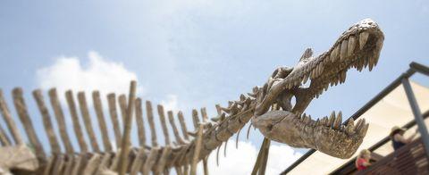 Jaw, Extinction, Skeleton, Bone, Fossil,