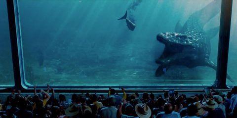 Underwater, Organism, Vertebrate, Crowd, Water, Marine mammal, Marine biology, World, Fish, Audience,
