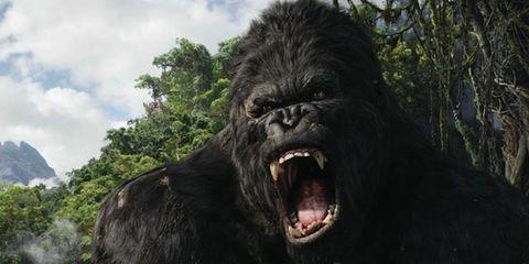 Vegetation, Organism, Natural environment, Skin, Vertebrate, Primate, Tongue, Terrestrial animal, Facial expression, Tooth,