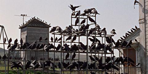 Resultado de imagen de hitchcock los pájaros fotograma