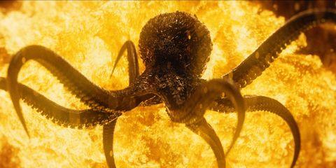 Yellow, Organism, Invertebrate, Amber, Arthropod, Metal, Macro photography, Arachnid, Circle, Pest,