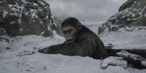 Primate, Terrestrial animal, Jaw, Snout, Atmospheric phenomenon, Wilderness, Snow, Geology, Geological phenomenon, Wildlife,