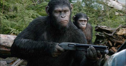 Organism, Natural environment, Skin, Primate, Vertebrate, Shoulder, Terrestrial animal, Joint, Nature reserve, Snout,