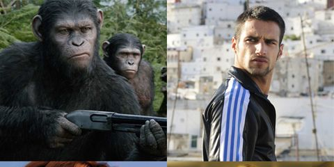Organism, Primate, Terrestrial animal, Temple, Collage, Snout, Tie, Fur, Common chimpanzee, Wrinkle,
