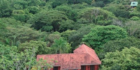Vegetation, House, Property, Natural landscape, Hill station, Jungle, Tree, Building, Botany, Architecture,