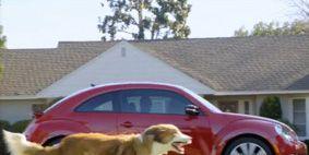 Dog breed, Property, Dog, Carnivore, Car, Fender, Sporting Group, Alloy wheel, Roof, Rim,