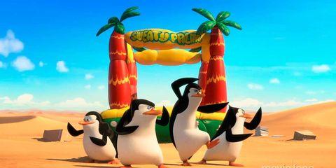 Penguin, Daytime, Organism, Natural environment, Vertebrate, Landscape, Flightless bird, Adaptation, Ecoregion, Beak,