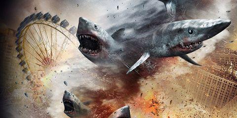 Organism, Shark, Cartilaginous fish, Art, Marine biology, Fin, Lamniformes, Requiem shark, Lamnidae, Snout,