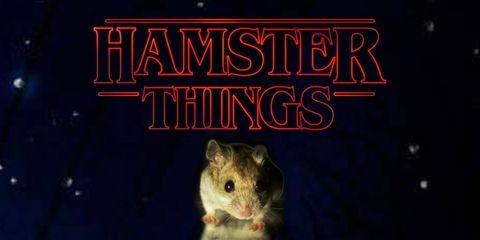 Whiskers, Text, Iris, Rodent, Snout, Terrestrial animal, Pest, Darkness, Rat, Muroidea,