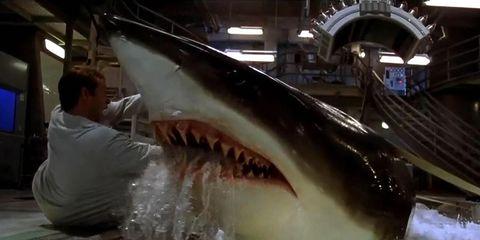 Fish, Jaw, Sand tiger shark, Shark, Cartilaginous fish, Organ, Great white shark, Tiger shark, Lamnidae, Requiem shark,