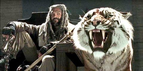Roar, Fang, Vertebrate, Tongue, Big cats, Tooth, Beard, Facial hair, Felidae, Facial expression,