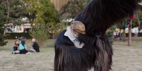 Fur, Natural material, Long hair, Bird, Wing, Feather, Flightless bird,