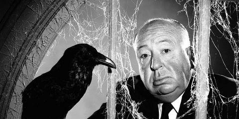 Monochrome, Bird, Monochrome photography, Crow, Black-and-white, Raven, Black, Crow-like bird, raven, New caledonian crow,