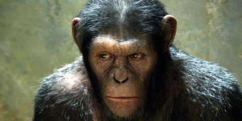 Lip, Cheek, Organism, Skin, Primate, Forehead, Shoulder, Vertebrate, Terrestrial animal, Snout,