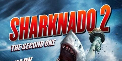 Lamnidae, Shark, Lamniformes, Cartilaginous fish, Tooth, Requiem shark, Great white shark, Jaw, Carcharhiniformes, Fang,