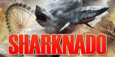 Organism, Vertebrate, Jaw, Cartilaginous fish, Shark, Lamniformes, Requiem shark, Fin, Marine biology, Lamnidae,
