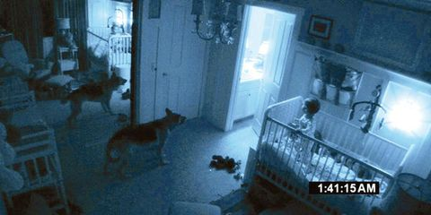 Property, Room, Floor, Dog, Interior design, Dog breed, Carnivore, Flooring, Door, Home,