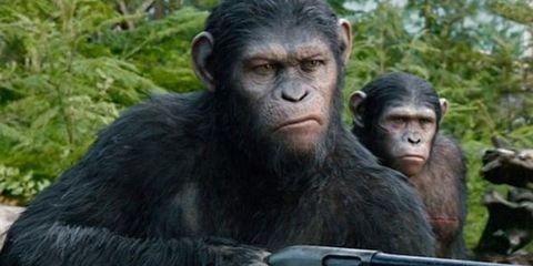 Nature, Organism, Natural environment, Skin, Primate, Vertebrate, Shoulder, Terrestrial animal, Joint, Nature reserve,
