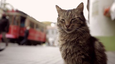 Cat, Small to medium-sized cats, Mammal, Whiskers, Felidae, Tabby cat, Carnivore, Snout, Domestic short-haired cat, Norwegian forest cat,