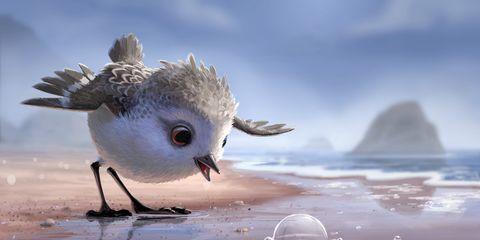 Nature, Liquid, Organism, Fluid, Bird, Beak, Adaptation, Feather, Reflection, Atmospheric phenomenon,