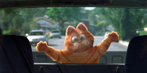 Automotive mirror, Glass, Windshield, Carnivore, Tan, Vehicle door, Snout, Peach, Automotive window part, Fawn,
