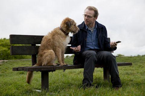 Human, Dog breed, Vertebrate, Mammal, Carnivore, Dog, Sitting, Sporting Group, Companion dog, Beard,