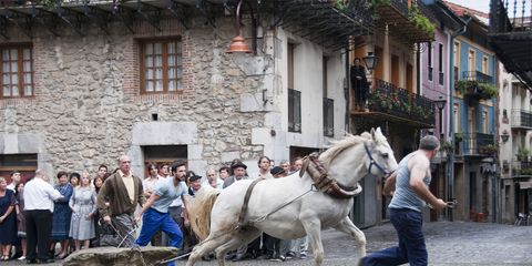 Human, Window, Bridle, Horse supplies, Halter, Rein, Horse, Working animal, Horse tack, Livestock,