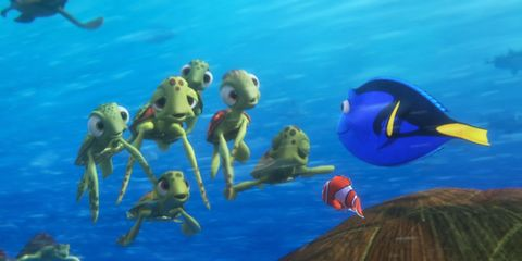 Fluid, Organism, Vertebrate, Underwater, Adaptation, Azure, World, Aqua, Marine biology, Fish,