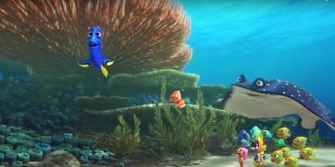 Organism, Vertebrate, Underwater, Coral, Majorelle blue, Fish, Ocean, Azure, Marine biology, Aqua,