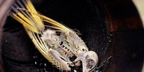 Invertebrate, Insect, Arthropod, Pest, Photography, Terrestrial animal, Close-up, Macro photography, Parasite, Locust,