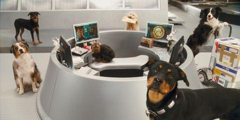 Dog breed, Vertebrate, Carnivore, Dog, Organism, Sporting Group, Companion dog, Snout, Pinscher, Working animal,